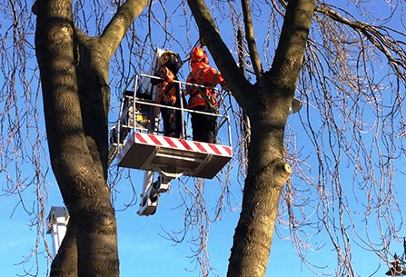 Vehicle-Mounted Boom Removes Branches Overhead in Residential Area Quickly and Swiftly