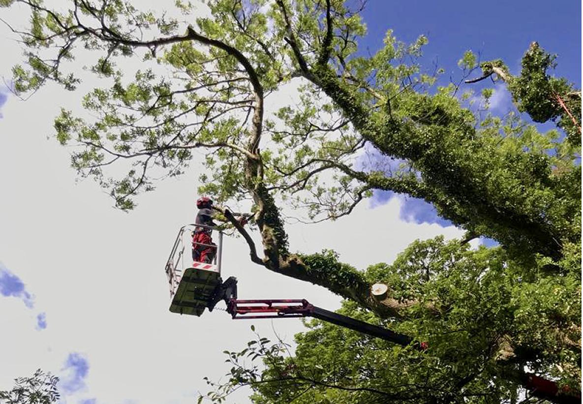 Tree Fellas Devon