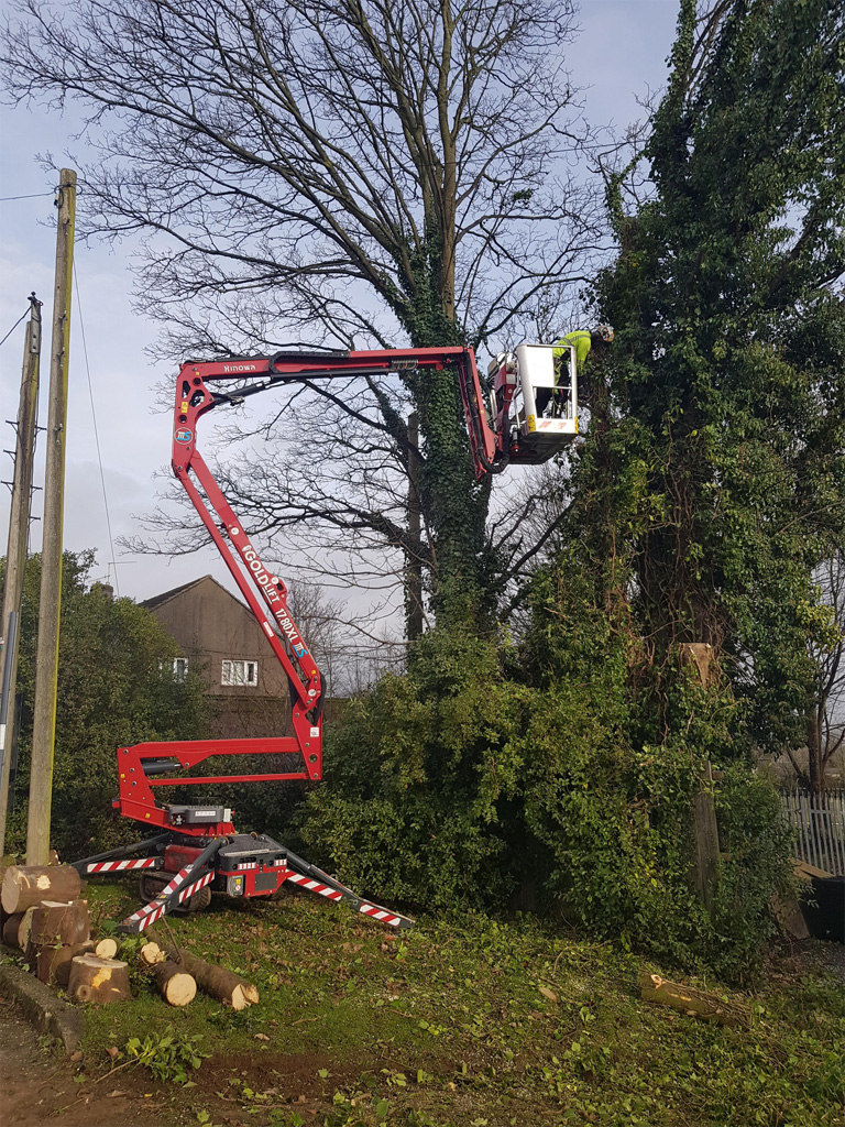Arborist prepares for ash dieback with Hinowa investment